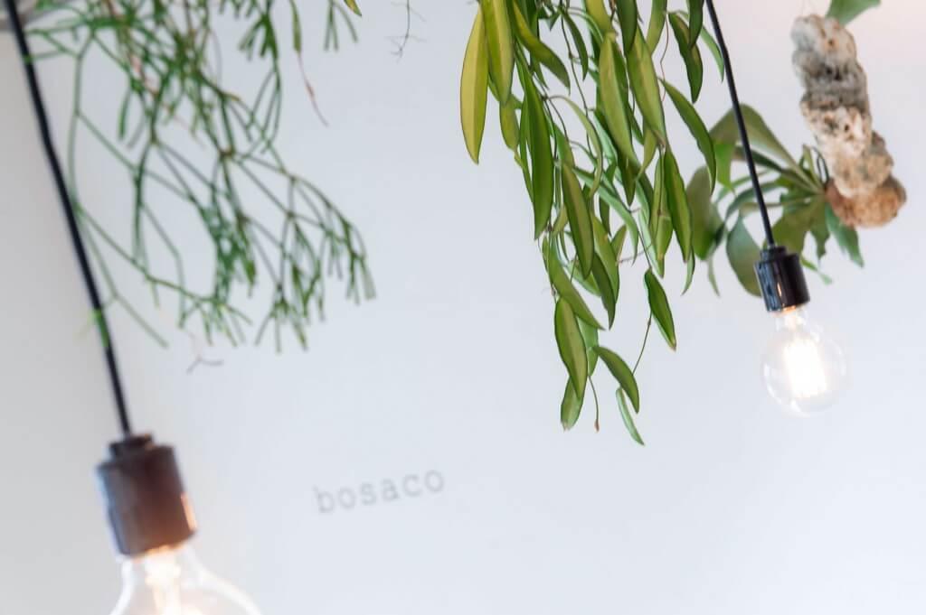 bosaco / Chiba